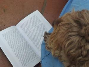 Greta reading The Luck of the Weissensteiners