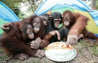 birthday-celebrants-ape-giddy-for-their-presents