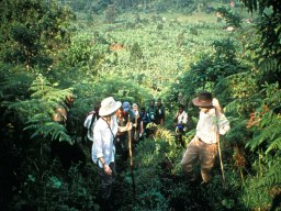 web-WARD_Trekking up Bwindi
