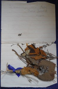 Frank Le Poidevin letter to Mum with dried flowers