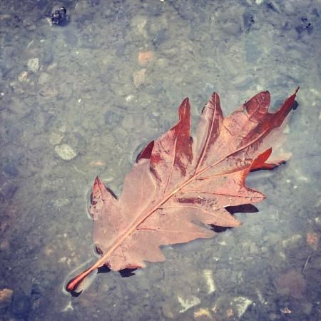 fallen-leaf-in-puddle-the-last-krystallos